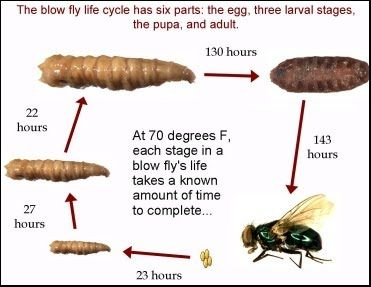 Lesson 4 Forensic Entomology Magic Of Forensic Science Forensic Science Forensics What Is Forensic Science
