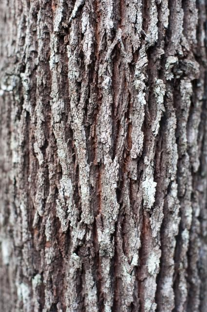 We Just Wanted To Share This Beautiful Image Of Oak Tree Bark Maybe You Are Off For A Walk In The Woods This We Tree Tattoo Tree Bark Texture Faux Tree