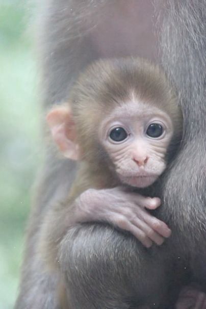 Outstanding Cute Baby Animals Video Download Superb Cute Baby Monkey Baby Animal Videos Cute Animals