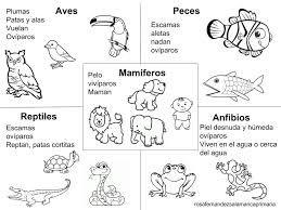 Resultado De Imagen Para Animales Viviparos Y Oviparos Para Colorear