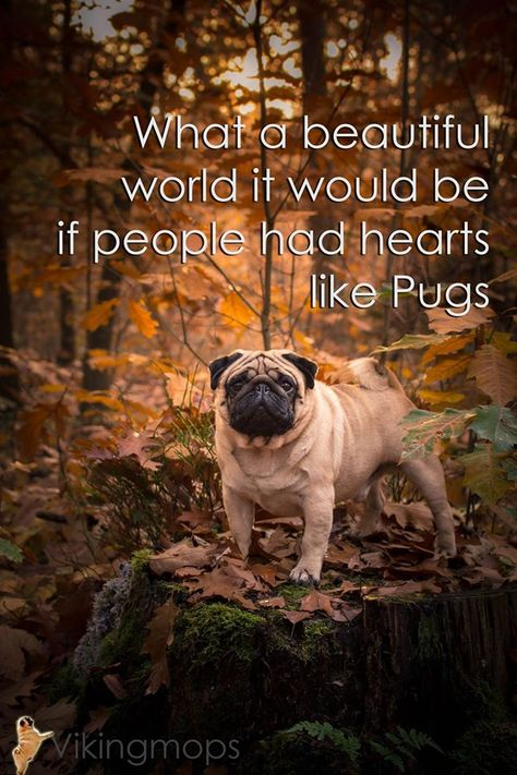 """Pug Power From your friends at phoenix dog in home dog training""""k9katelynn"""" see more about Scottsdale dog training at k9katelynn.com! Pinterest with over 18,000 followers! Google plus with over 119,000 views! You tube with over 350 videos and 50,000 views!! Twitter 2200 plus;)"""