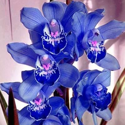 100pcs Bag Numerous Color Orchid Seeds Various Orchid Species For Garden And Home Hot Sale Orchid Seeds Cymbidium Orchids Orchid Flower