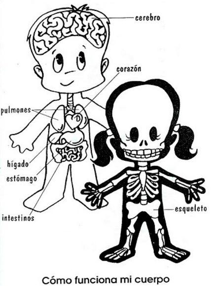 Resultado De Imagen Para Dibujo Esqueleto Humano Para Ninos Esqueleto Humano Para Ninos El Cuerpo Humano Infantil Cuerpo Humano Para Ninos