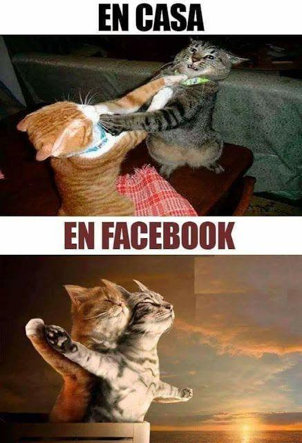 Las Dos Caras De La Moneda Gatitos Divertidos Humor Divertido Sobre Animales Meme Gato