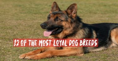 How To Trim Dog Nails Quickly And Safely Loyal Dog Breeds Trimming Dog Nails Dog Nails