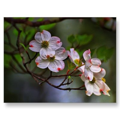 43 Ideas for pink dogwood tree tattoo spring