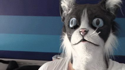Cat's nightmare - OnlineGIFs #funny #funnygifs #cats #animals
