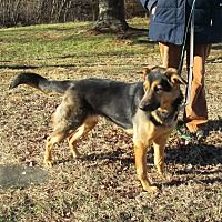 Pin By Chris Gallagher On Adoptable Pets Rhode Island German