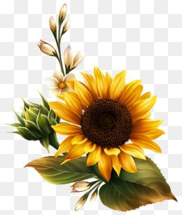 One To The Sun Flowers Sunflower Yellow Green Leaves Buds Sun Green Leaves Picture Clipart Sunny Clipart Sunflower Pictures Flower Painting Sunflower Painting