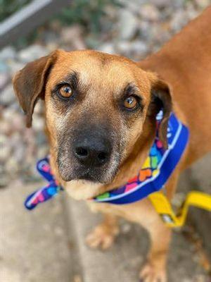 Pin On Animals Needing Rescue
