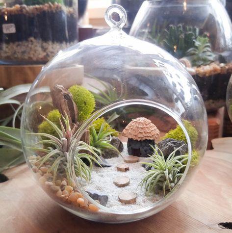 Air Plant Terrarium Kit Diy Miniature Landscape Featuring A Handmade Hut 3 Plants Driftwood
