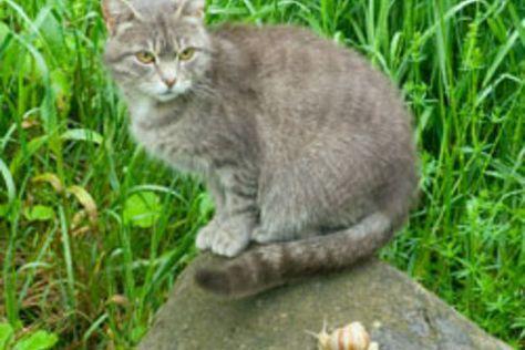 Katzen Aus Dem Garten Vertreiben 5 Effektive Tipps Schnecken Im Garten Kaffeesatz Ausgestopftes Tier
