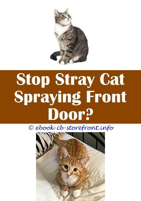 3b72e45d16810e52058a67239ac086d7 - How To Get Rid Of Cat Dander On Furniture