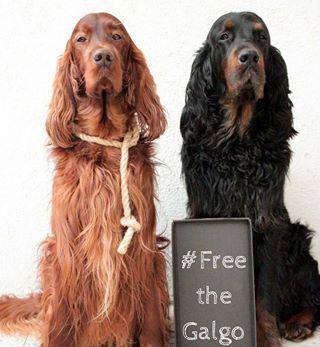 Hundekekse Mit Kase Machen Wir Heute Denn Wir Backen Fur Damenbesuch Den Wir Bekommen Meine Mama Feiert Ihren Sage Und Schreib Hunde Futter Hunde Hundekekse