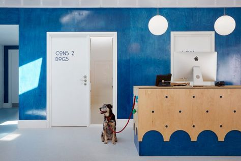 London Animal Hospital Respects The Age Old Rivalry Between Cats And Dogs London Hotels Dog Boarding Near Me Animals