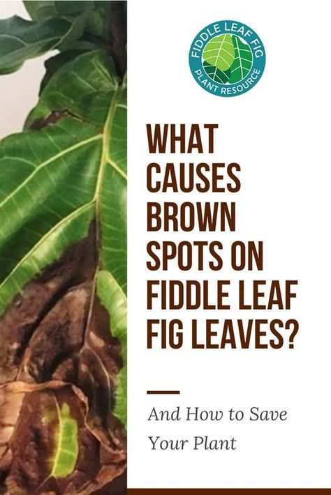 How To Get Rid Of Brown Spots On Plants