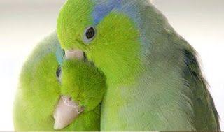تربية طيور الكناري في أربع مراحل Beautiful Birds Animals Beautiful Pet Birds