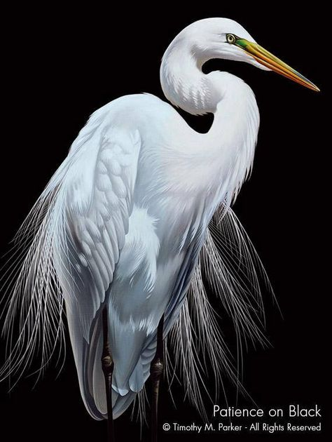 Contemporary Egret Painting Reproduction • PATIENCE • Tropical Bird • Black and White Bird Art • Bla