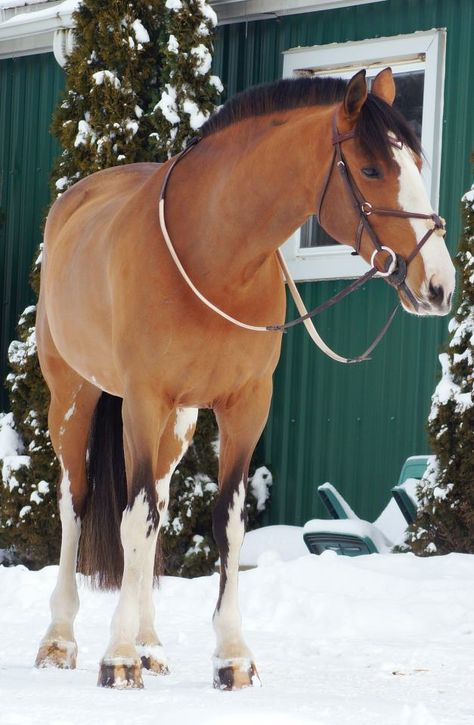 thephonypony:    xxkelsx:    horse-tack:    Aquaa  All rights reserved to Avery Sharp    Get in my barn    this horse, and his rider, are incredibly awesome.