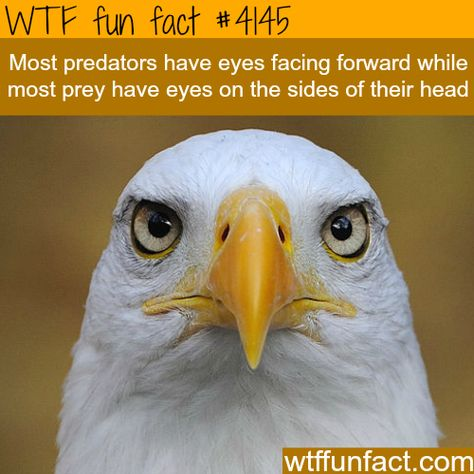 Well, that explains a lot.The difference between predator and prey - WTF fun facts
