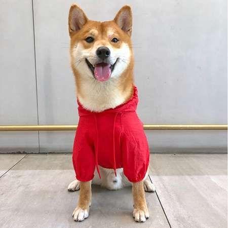 Aewanstyle 通販 Stussy 犬の服 レインコート 小型犬 中型犬 薄手 ブランド ステューシー ペット雨着 高品質 激安通販 税込み 送料無料 2021 ペット服 猫 服 ペット