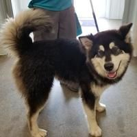 Adopt A Pet Near You Petsmart Charities Pets Humane Society Help Homeless Pets