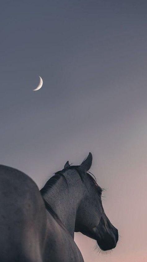 Пин от пользователя Rmahon на доске Aaa в 2021г | Фотографии лошадей, Портреты домашних животных, Лошадь обои