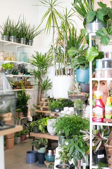 The Zen Succulent Plant Shop Corner With Images Plants