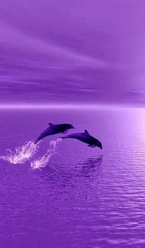 I 💜 U, cos you're PURPLE. Dolphins surfing in purple sunset! Purple Love, Purple Sunset, All Things Purple, Shades Of Purple, Pink Purple, Lilac, Light Purple, Purple Flowers, Dark Purple Aesthetic