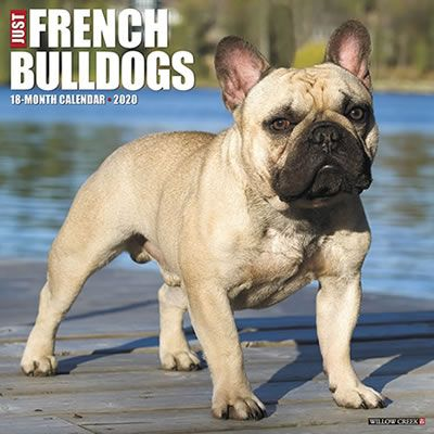 Just French Bulldogs 2020 Wall Calendar French Bulldog Willow