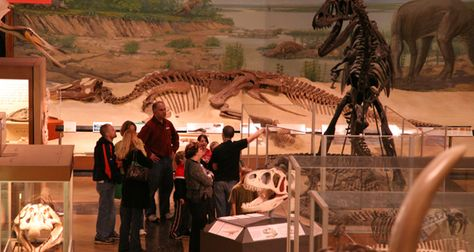 The Museum of Natural History is filled with artifacts from the state of Michigan, and the world!