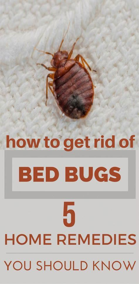 7 Essential Oils To Get Rid Of Bugs At Home Rid Of Bed Bugs Bed