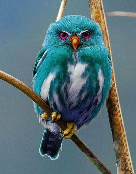Beautiful Owl, Animals Beautiful, Cute Animals, Beautiful Pictures, Funny Animals, Cute Birds, Pretty Birds, Birds 2, Birds Pics