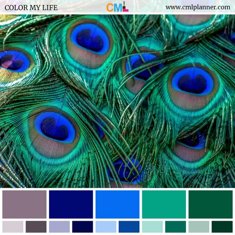 Today's dose of color inspiration is a feathery color palette featuring Monsoon, Navy Blue, Blue Ribbon, Niagara, and Aqua Deep colors. Blue Color Combinations, Color Schemes Colour Palettes, Green Color Schemes, Bedroom Color Schemes, Brown Color Palettes, Peacock Color Scheme, Peacock Colors, Peacock Feathers, House Paint Design