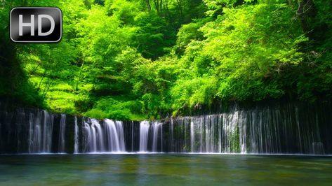 Расслабляющие Звуки Реки, Звуки Птиц, Лесная Река, 5 Часов ...