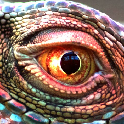 Close up reptile eye which has a different pupil shape compared to other eyes have seen. In my illustration, I plan to have a thin pupil reminiscent of snakes as it will fit my game's aesthetic and idea.