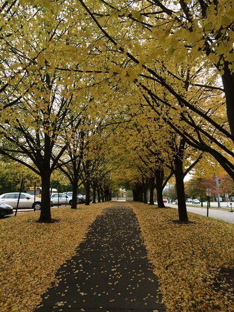 The Avenue #saintmaryscollege