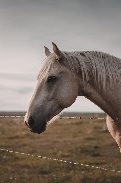 Not sure i posted here before or not Cute Horses, Pretty Horses, Horse Love, Horse Girl, Horse Wallpaper, Animal Wallpaper, Animals And Pets, Baby Animals, Cute Animals