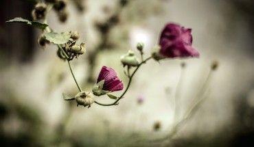 الطبيعة الزهور Hd Wallpaper Flowers Nature Flower Wallpaper