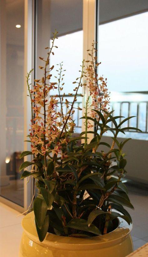 Passende Zimmerpflanzen bestimmen und pflegen -    freshideen - pflanzen für wohnzimmer