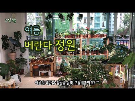 Green Ssum Youtube 2020 실내식물 제라늄 여름