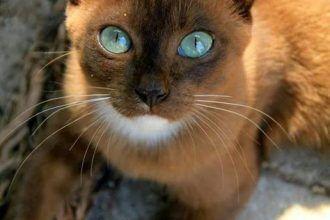 Katzen Katzchen Super Und Stolz Chats Chatons Superb Fier We Love Cats Katzen Hunde Super