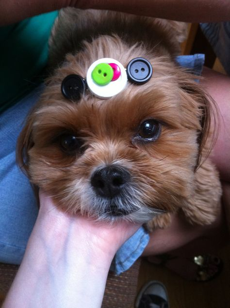 I made that. The barrette, not the dog