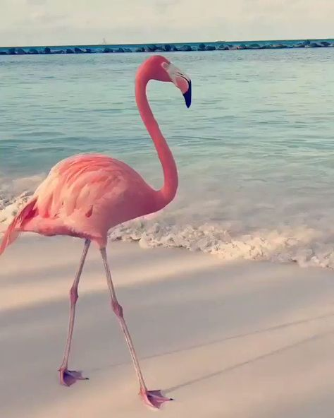 """StanceGrounded on Twitter: """"In Aurba Dancing Flamingo. What a beauty. Retweet ❤… """""""