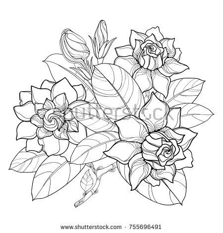 Vector Outline Gardenia Flower Bunch Bud And Ornate Leaves In Black Isolated On White Background Bouqu Trendy Flowers Bunch Of Flowers Flower Tattoo Shoulder