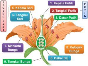 Gambar Bunga Beserta Strukturnya Berikut Ini Gambar Dan Bagian Bagiannya Ada Banyak Contoh Bunga Tidak Sempurna Yang Dapa Di 2020 Bunga Gambar Bunga Kembang Sepatu