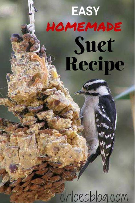 Chloe's Easy Homemade Suet Recipe: Big Mill B&B birds need special foods in the cold winter. I was snowed in so I creat Homemade Bird Houses, Homemade Bird Feeders, Squirrel Food, Bird Food, Homemade Suet Recipe, B & B, Suet Bird Feeder, Suet Cakes, Fat Bird