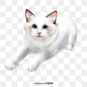 Illustration White Cat Hand Drawn Elements Animal Lovely Little Cat Png Transparent Clipart Image And Psd File For Free Download Cat Illustration Cat Clipart Cat Background