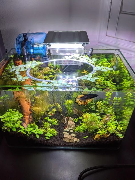A place for aquatic flora and fauna enthusiasts! Whether you have a question to ask or a planted tank to show off, this is the place.