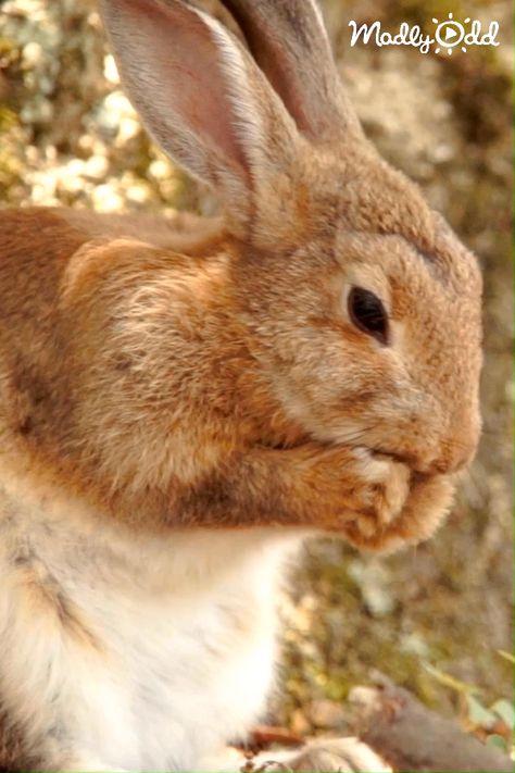 Cute bunny rabbit enjoying a lovely day. #Rabbit #bunny #easter #animals #cute #cuteanimals #